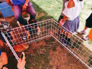 動物を触れるコーナー