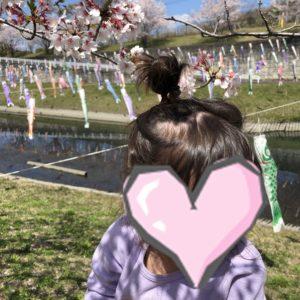 桜と鯉のぼりが写っている