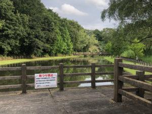 橋の先に池がある